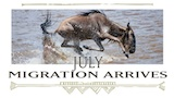 July - Migration arrives