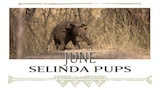 June - Selinda Pups
