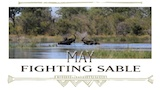 May - Fighting sable