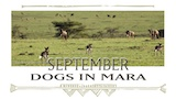 Sept - Dogs in Mara